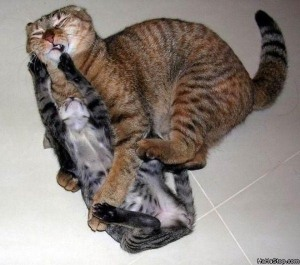 Cats_Fight